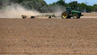 Sequía afecta a por lo menos 20 municipios de Veracruz