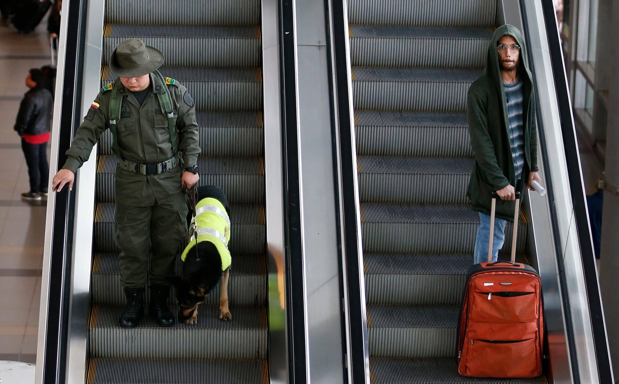 Envenenan al perro que salvó vidas tras terremotos en Italia