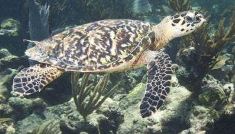 Costas de Campeche, lugar de anidamiento de tortugas