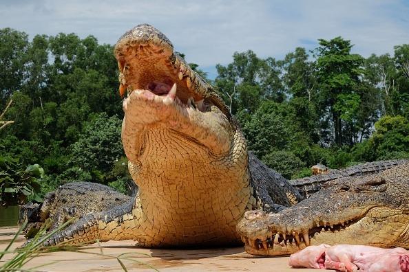 Hallan cadáver devorado por cocodrilos en una zona hotelera — Cancún