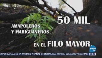 Amapoleros Guerrero Favor Despenalización Drogas