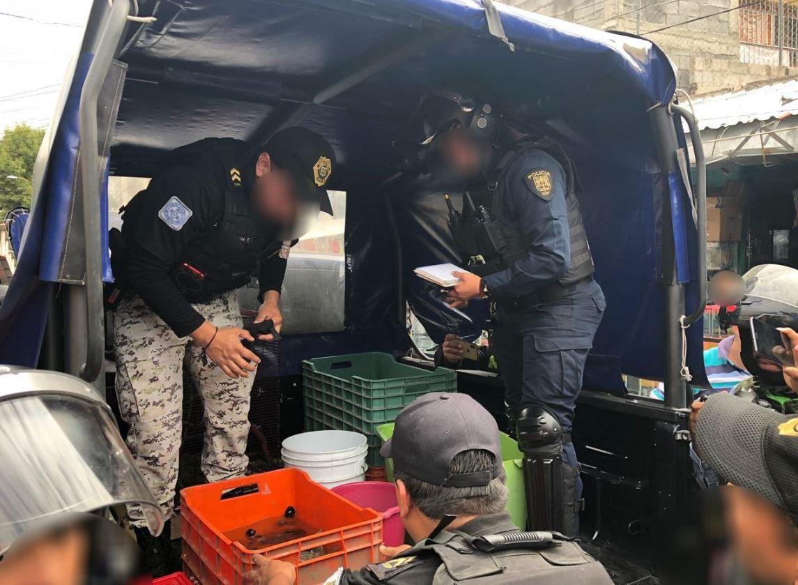 Aseguran autoridades 15 cocodrilos en el Mercado Morelos