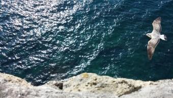 Contaminacion-mar-huella-ecologica-ecologia-Mexico-Basura