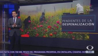 Cultivan amapola 50 mil personas en el Filo Mayor de Guerrero