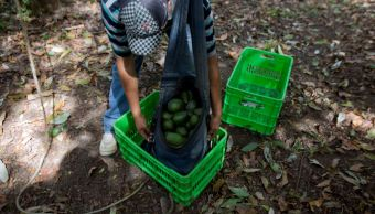 Demanda de estacionalidad agrícola en TLCAN, retirada por EU