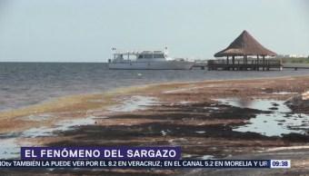 El zargazo y sus efectos en la Península de Yucatán