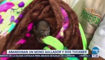 Extra, Extra: Abandonan un mono aullador y dos tucanes