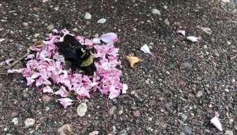 Funeral-Hormigas-Abeja-Video-Redes-Sociales-Viral-Extraño-Naturaleza-Animales-Portada