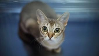 Gato Tu Felinos Animales Perros Gatos
