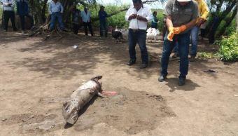 Profepa atiende reporte de manatí muerto en Centla, Tabasco