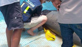 Manatíes en Tabasco no murieron por contaminación en el agua