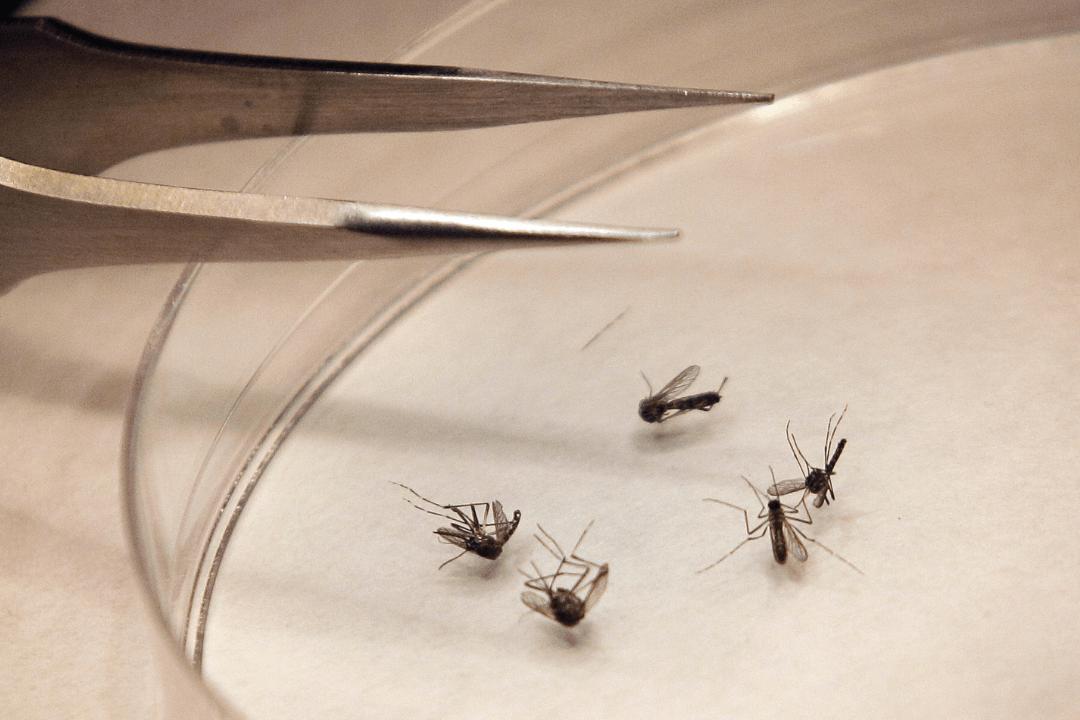 FOTO: Epidemia de dengue amenaza a Argentina, el 22 de enero de 2020