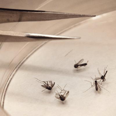 Epidemia de dengue amenaza a Argentina