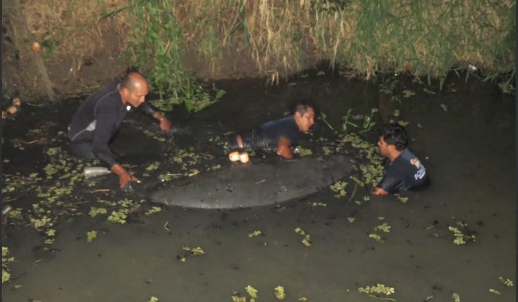 Muerte de manatíes en Tabasco, por agua contaminada