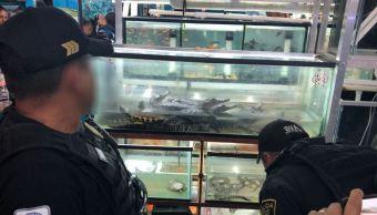 Realizan operativo de protección animal en mercado Morelos