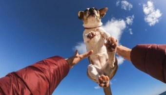 ¿Cuánto gastas en tu mascota? Millennials, 3,500 pesos al mes