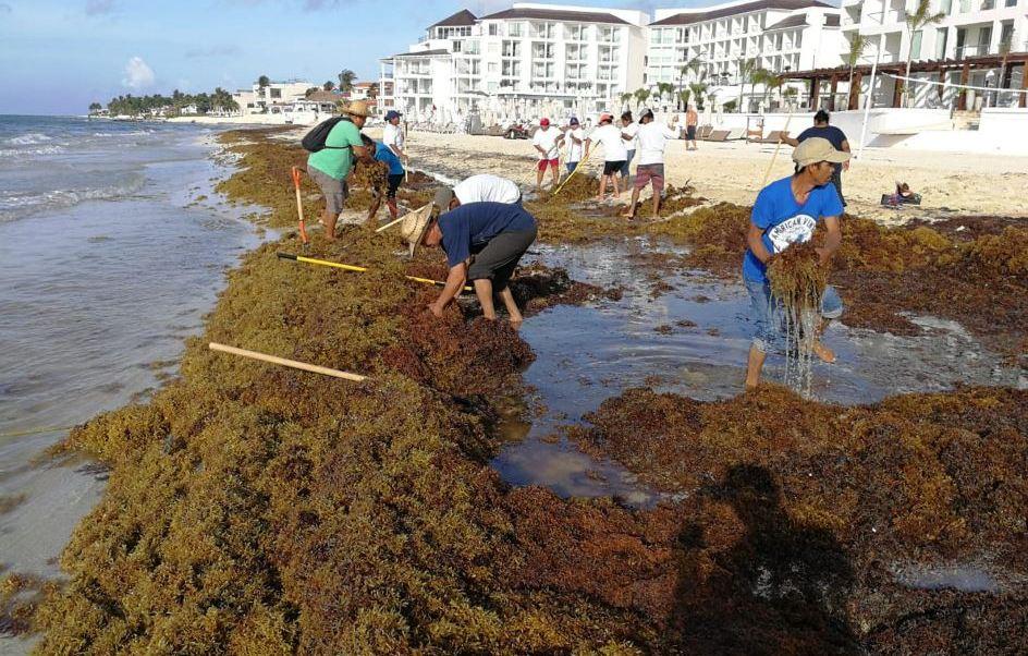 Recolección de sargazo en Quintana Roo la ejecutan habitantes