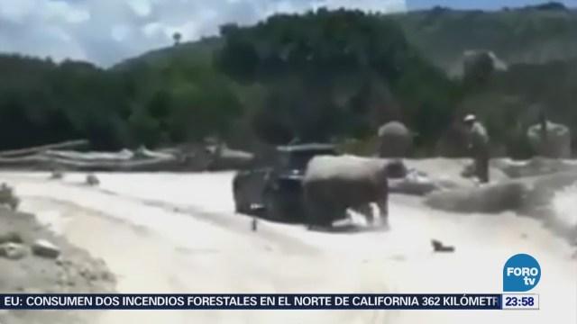 Rinoceronte Ataca Camioneta Africam Safari Puebla