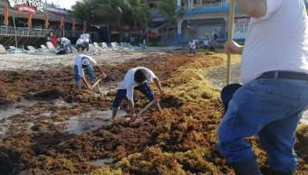 Sargazo que afecta Cancún y Playa del Carmen puede ser fertilizante