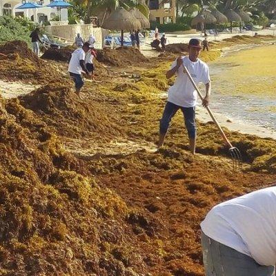Sargazo es usado como fertilizante por agricultores de Tulum, Quintana Roo