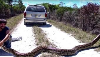 Superserpientes Serpientes Científicos Florida Especie Pitones