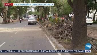 Suspenden servicio de trolebús por caída de árbol