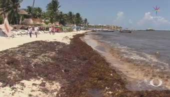 UNAM Solución Crisis Sargazo Caribe Quintana Roo