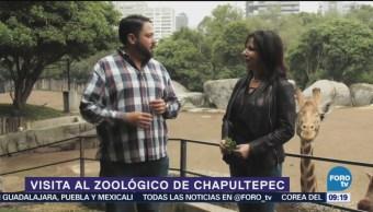 Visite el Zoológico de Chapultepec