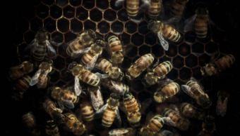 Destruyen habitat de abejas en Yucatán