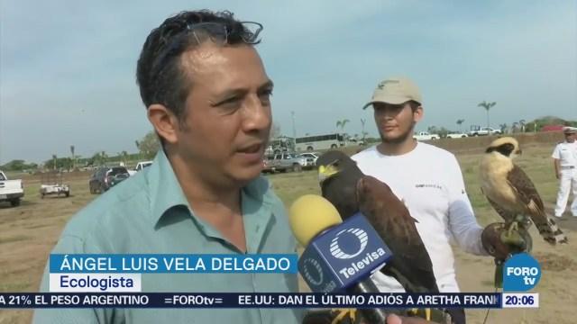 Aves Riesgo Deforestación Veracruz Grupos Ecologistas