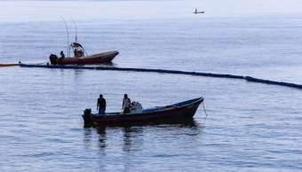 Sargazo en Cancún; instalan el primer kilómetro de barrera