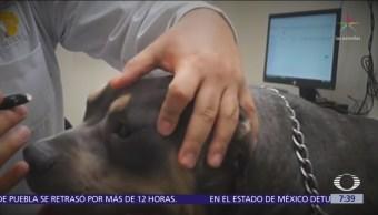 Campaña en redes sociales detona homicidio de veterinario