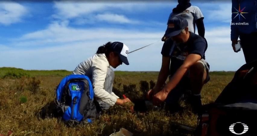 Manglares, protegidos en Bahía Magdalena, Baja California Sur