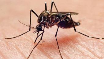 Activan alerta por brote de dengue en Oaxaca