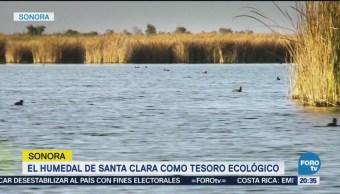 Humedal De Santa Clara Tesoro Ecológico Biodiversidad