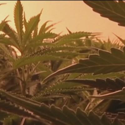 La marihuana en Estados Unidos y Canadá
