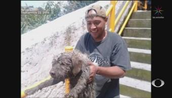 Rescatan Perro Barranca Delegación Álvaro Obregón
