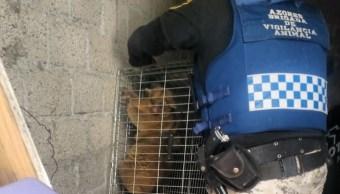 Martucha moviliza a Brigada de Vigilancia Animal de la CDMX