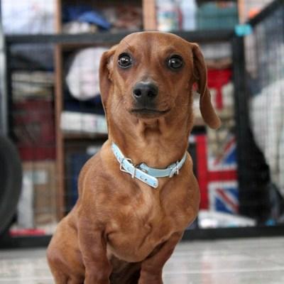 Vecinos organizan comederos comunitarios para perros callejeros en Puebla
