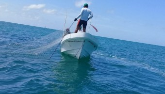 Pesca ilegal en Campeche afecta captura de pulpo