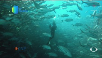 Por el Planeta Explotación de sardina en el Mar de Cortés