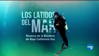 Por El Planeta Los Latidos Del Mar Reserva Biósfera Bcs
