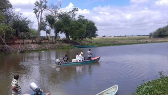 Profepa: No han muerto manatíes en Tabasco en últimos días