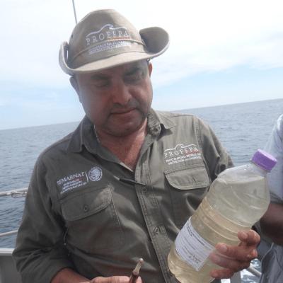 Profepa investiga la muerte de tortugas golfinas en las costas de Chiapas