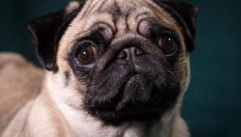 ¿Qué hacen las mascotas antes de morir?, veterinario lo revela