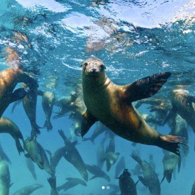 Redes de pesca amenazan a focas y lobos marinos en el Mar de Cortés