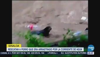Rescatan Perro Arrastrado Corriente Río Culiacán