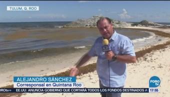 Sargazo Afecta Costas Tulum, Quintana Roo