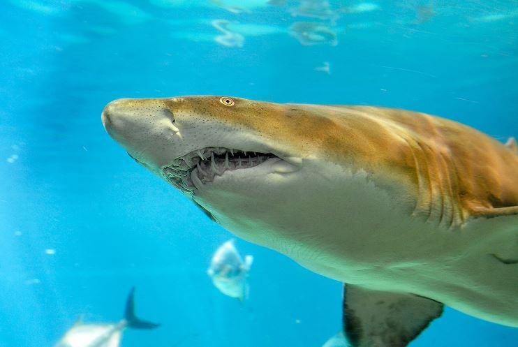 Sacrifican seis tiburones tras ataques contra turistas