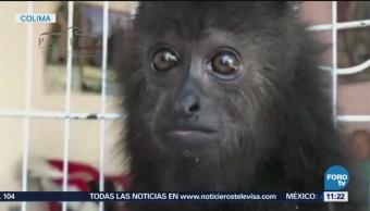 Capturan especies en peligro de extinción en zonas urbanas de Colima
